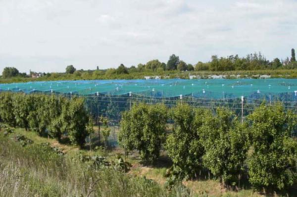 Vogelschutznetz, grün, 16 x 100 m, 17 mm Masche